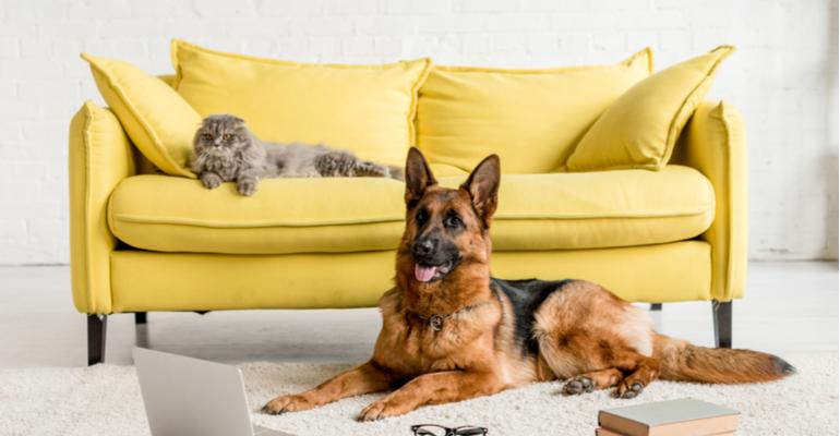projetos de móvel para pets.png